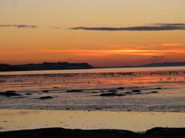 sunset-with-birds-islay